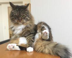 飼い猫 卑弥呼