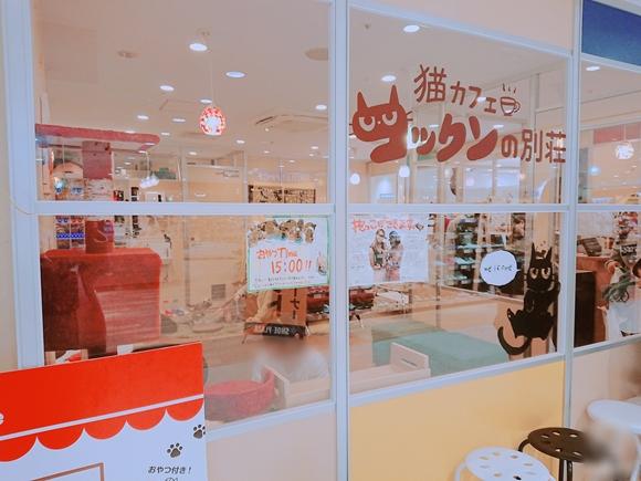 横浜の猫カフェ コックンの別荘