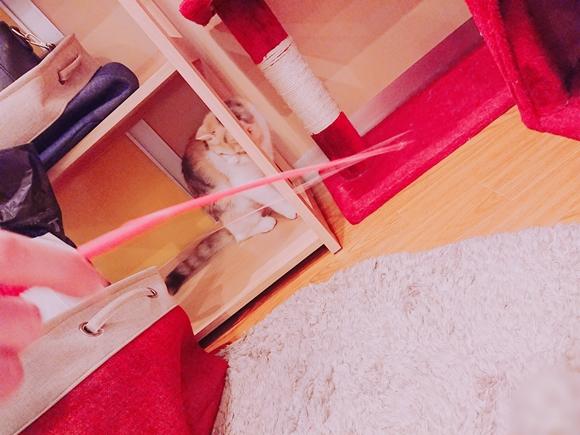 横浜の猫カフェ コックンの別荘のおもちゃ