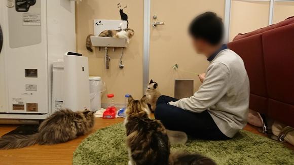 横浜の猫カフェ コックンの別荘の店員さん