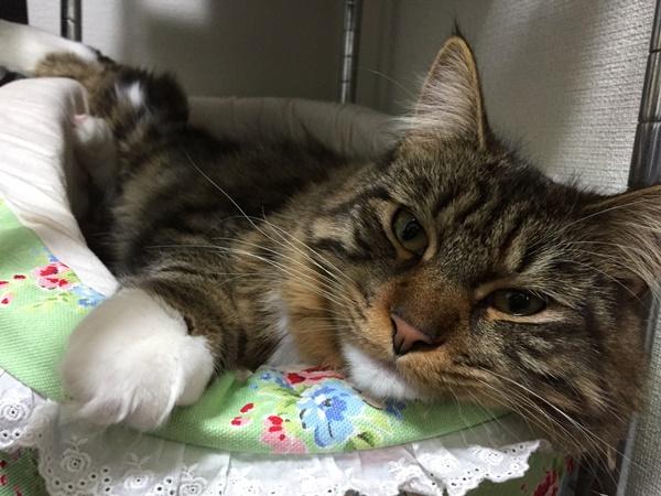 猫用のフカフカベッド