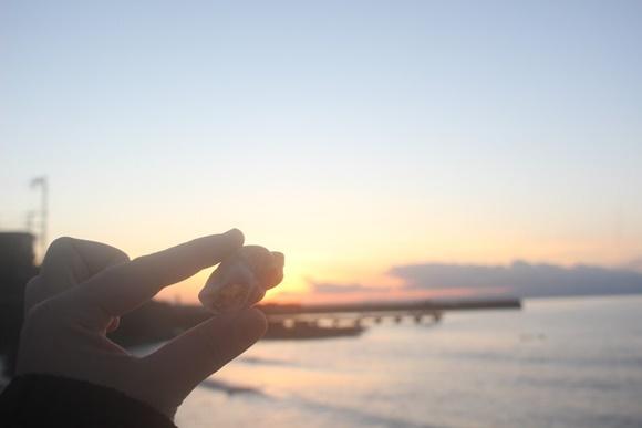 海岸の貝殻