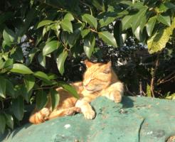 多摩川沿いに居た猫
